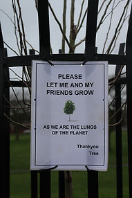 Tree sign lungs.JPG