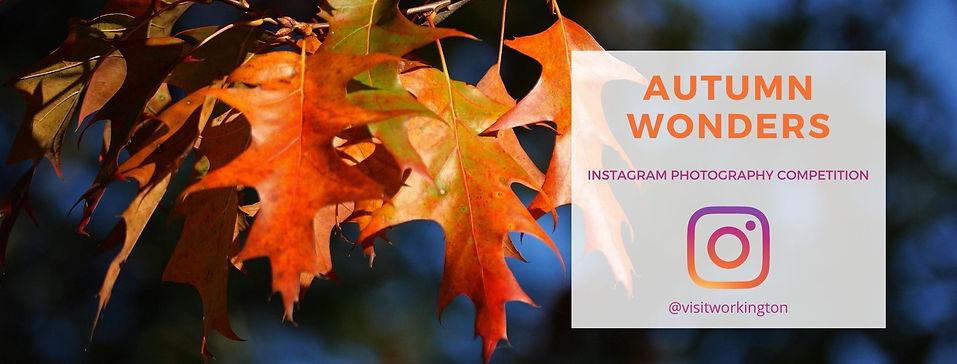 Autumn Wonders Website Page Header.jpg