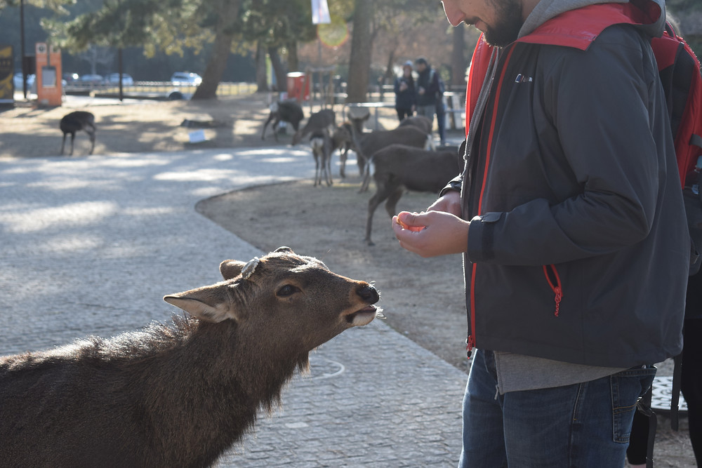 What to do on a day trip to Nara, Japan