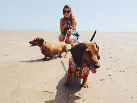 Couple quit the 9-5 to explore Australia, saving thousands by dog/house-sitting