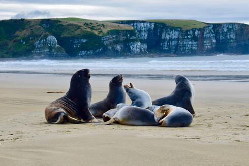 New Zealand Photo Gallery
