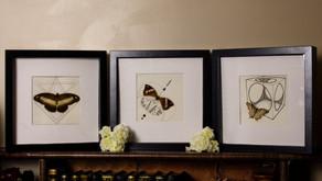 Présentation de gamme : les Papillon'art