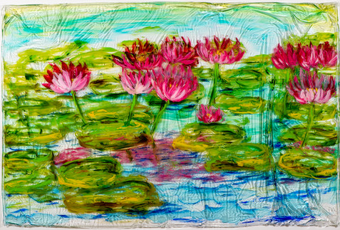 Tropical Water Lillies