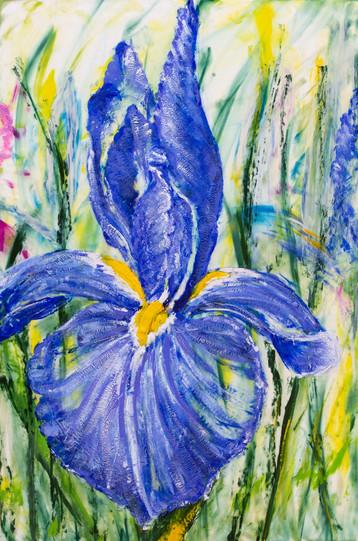 Cobalt Violet Iris