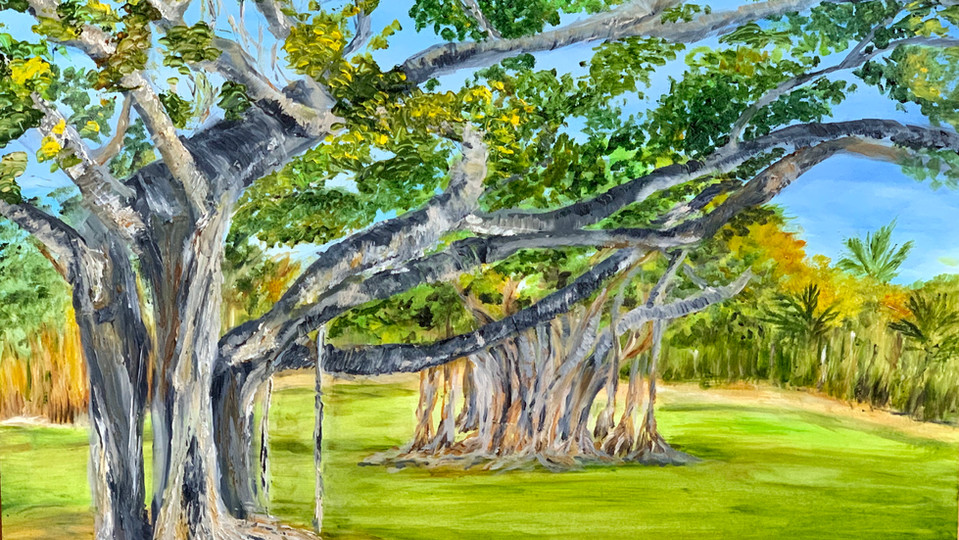 Florida Banyan Tree