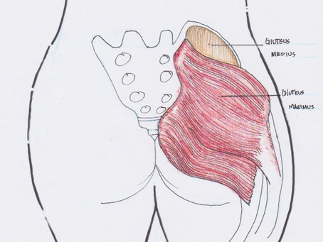 "Gluteal Amnesia I - What Do the ""Glutes"" Do?"