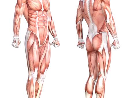 Attributes of Skeletal Muscle