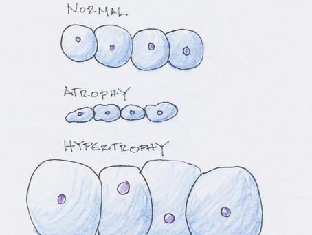 Gluteal Amnesia III - Muscular Biology