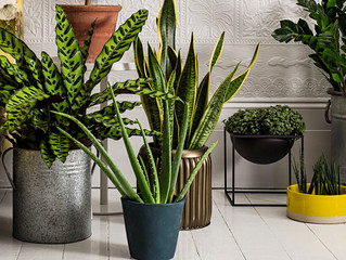 Benefits of House Plants