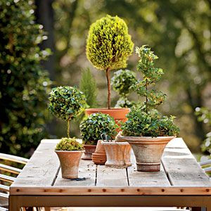 Easy and simple topiary