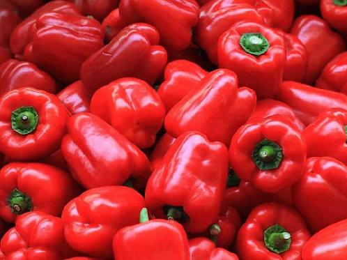 Capsicum-red [500 g]