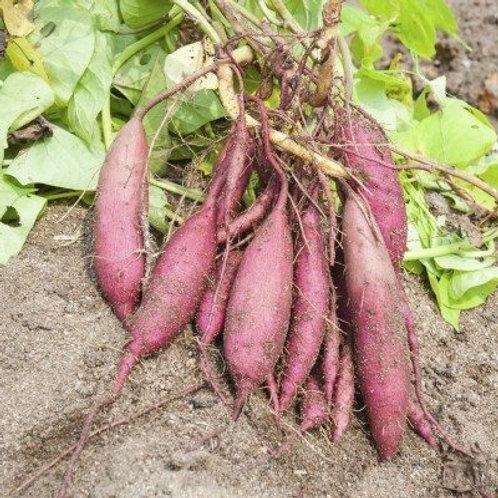 Sweet Potato [500 g]