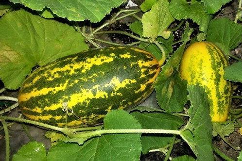 Cucumber Mangalore [1 kg]