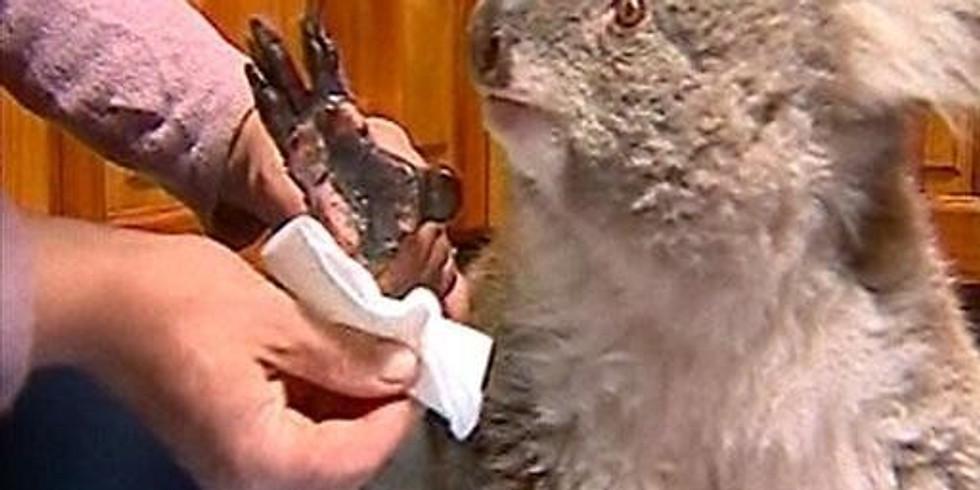 Help Australian Wildlife Through Crafting #1 of 2