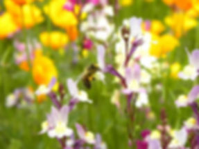 Bee in pictorial Meadow