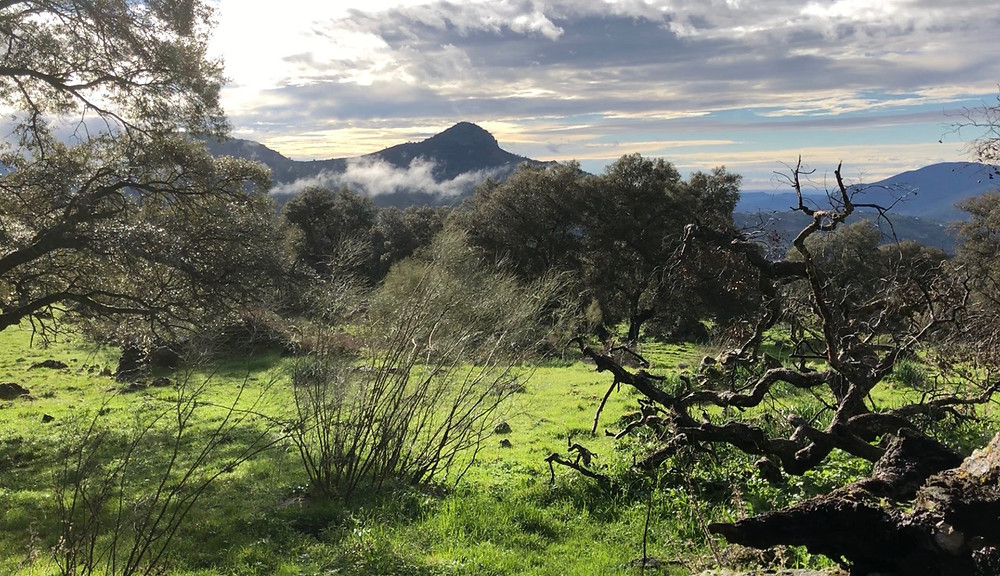 Andalucia Rewilding Project