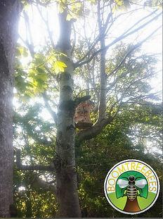Boomtree Bees