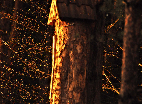 Learning from Wild Bees and Tree Beekeeping
