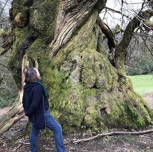 Research - Study of Wild Bees in Ancient Tree Forests in the UK