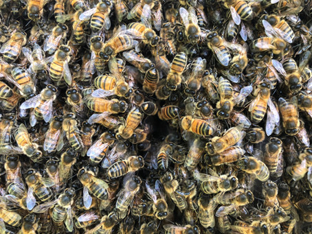 What are beekeepers for?