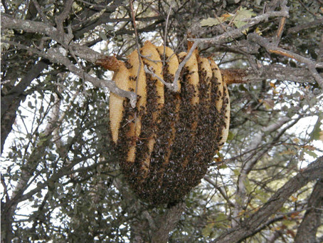 Hives for Bees: Seeking balance
