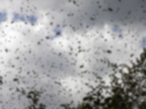 Swarm In Flight