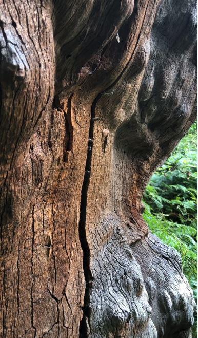 Oak Tree Nest - Nottingham