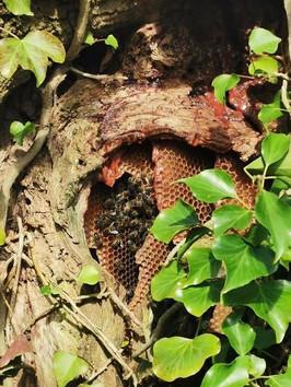 Oak Tree Nest - Wiltshire