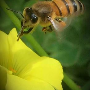 Hale, Hallowed Honeybees