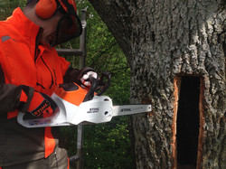 Cutting the bee entrance hole