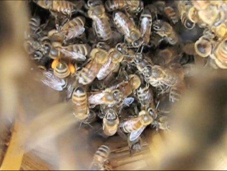 The Alchemy of Bee-ing