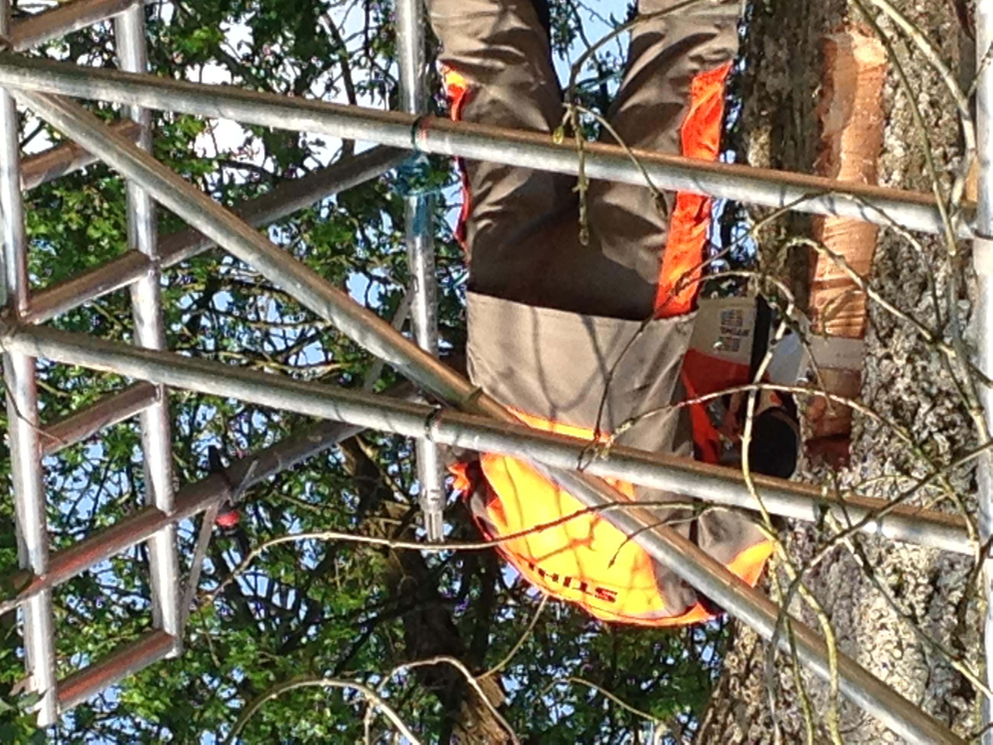 Initial Chain Saw Cuts