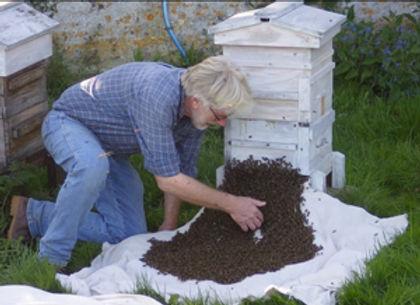 Gareth John hives a swarm