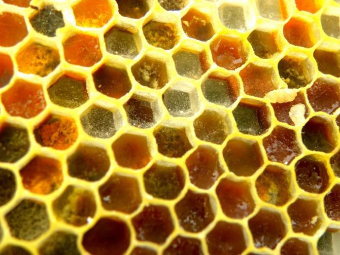 Pollen in Comb
