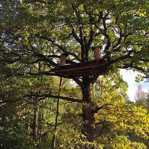 Rewilding - Restoring Tree Beekeeping Traditions of Beleraus