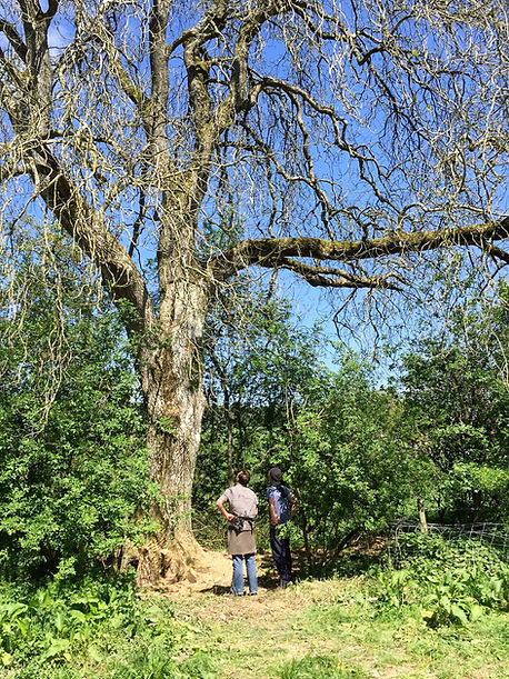 Zeidler Tree Beekeeping Hive