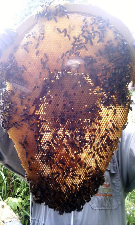 Hives for Bees: Seeking balance