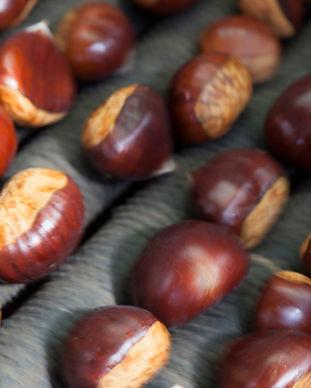 Hall-Stanley-Chestnut-Harvest-7-HR.jpg