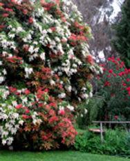 Hall Stanley Giffs Garden.jpg