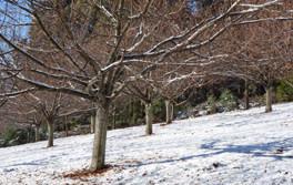 Hall Stanley Chestnut Orchard Snow.jpg