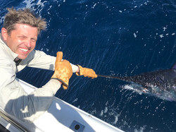 Tag and release of a Striped marlin