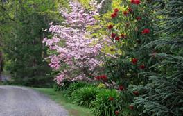 Hall-Stanley-Chestnuts-Garden-6.jpg