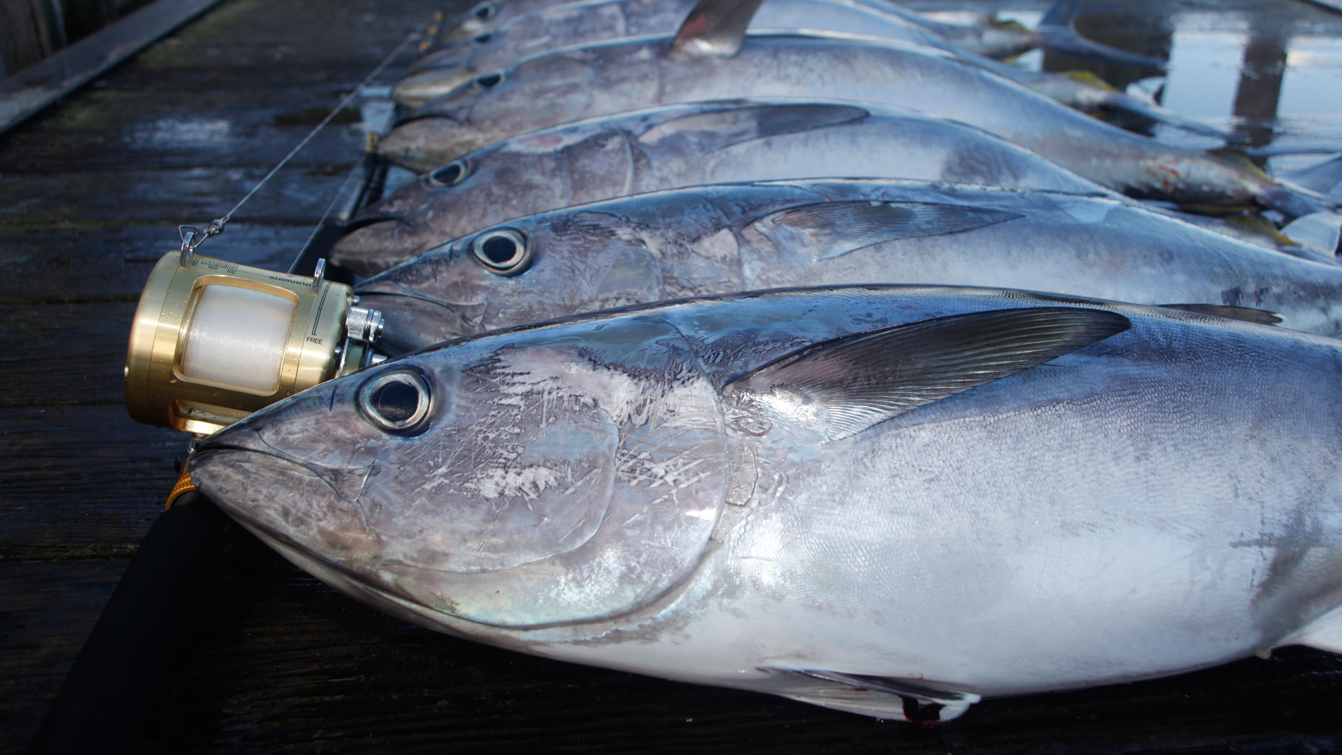 101-Swordfish2