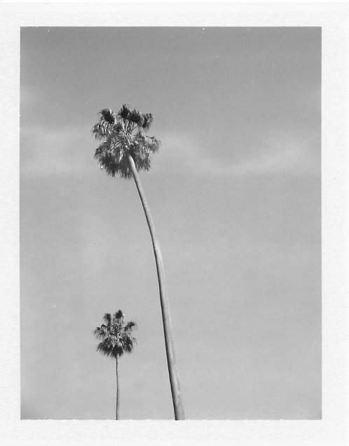 "FineArt Print - ""CALIFORNICATION"""
