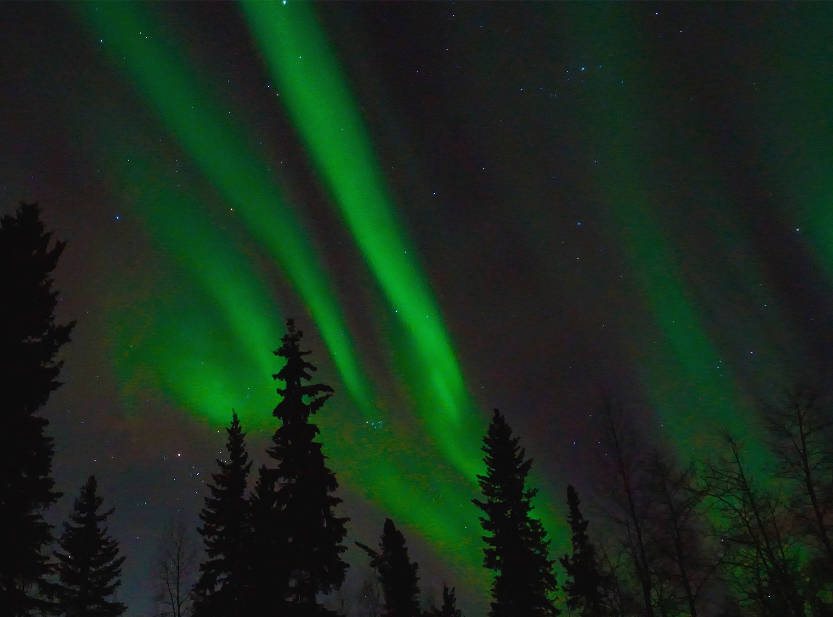 NIGHT SKI (Aurora Tour)