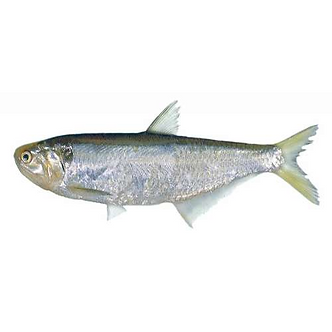 Other Sardines