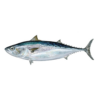 Other Tunas
