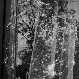 'web of life'