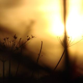 'last ray'