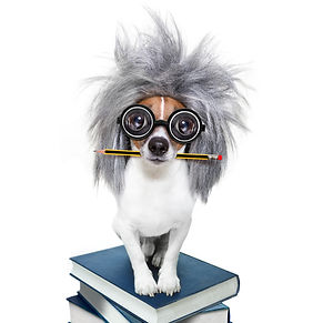Intelligent Smart  Dog With Books.jpg